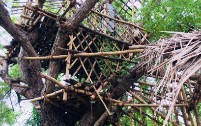 Pavani – Roofing
